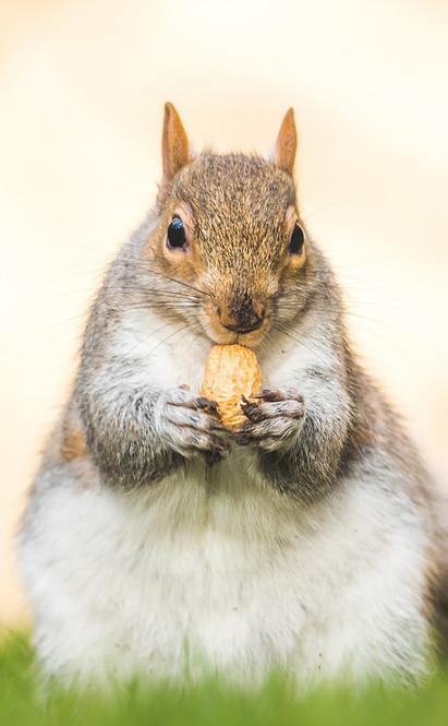 Mindful eating, peanut,