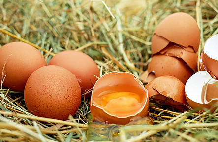 Best cheap healthy foods - 4 eggs lying on grass with cracked egg shells
